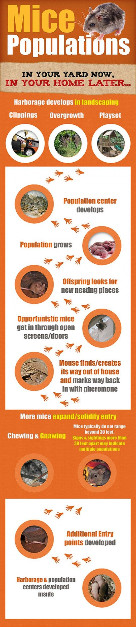 57 best home pest control images on pinterest pest control