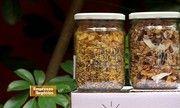 Pequenas Empresas, Grandes Negócios - Jovens de SP criam empresa de alimentos naturais a fim de espalhar qualidade de vida | globo.tv