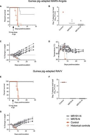 Therapeutic treatment of Marburg and Ravn virus infection in nonhuman primates with a human monoclonal antibody | Science Translational Medicine