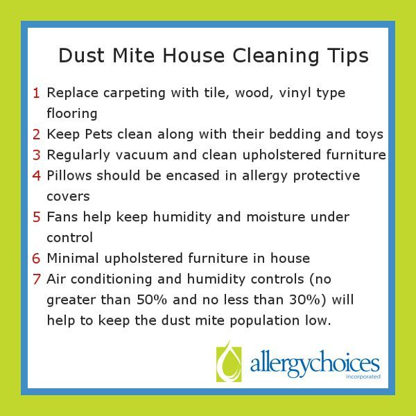 Dust Mites Dust Mites Mites Dust