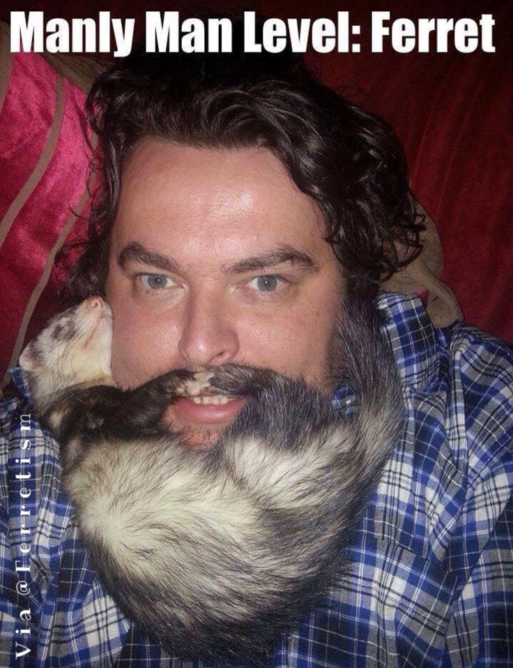 Ferret beard and mustache.. Love this!!