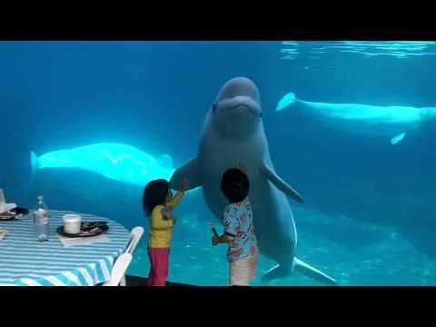 whale CT...Belugas tease our three kids - YouTube