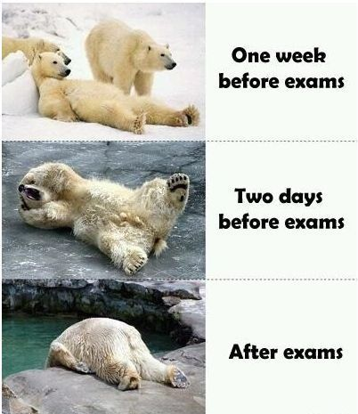 Prepping for exams.