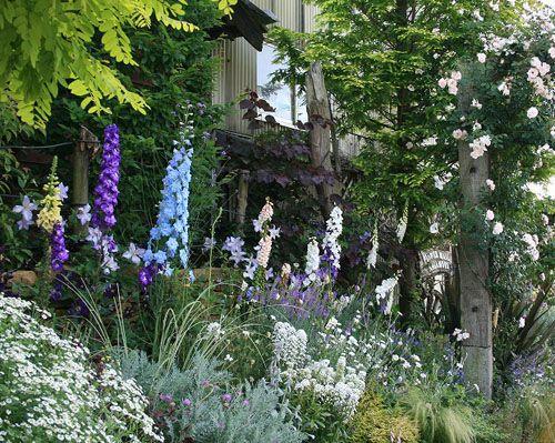 イングリッシュガーデン 英国庭園 秋苗 宿根草 多年草 ガーデンニング