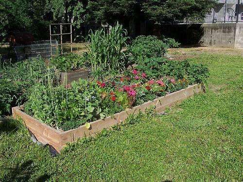 How to Organize a Vegetable Garden