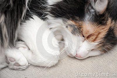 Sleeping cat in a cute posture