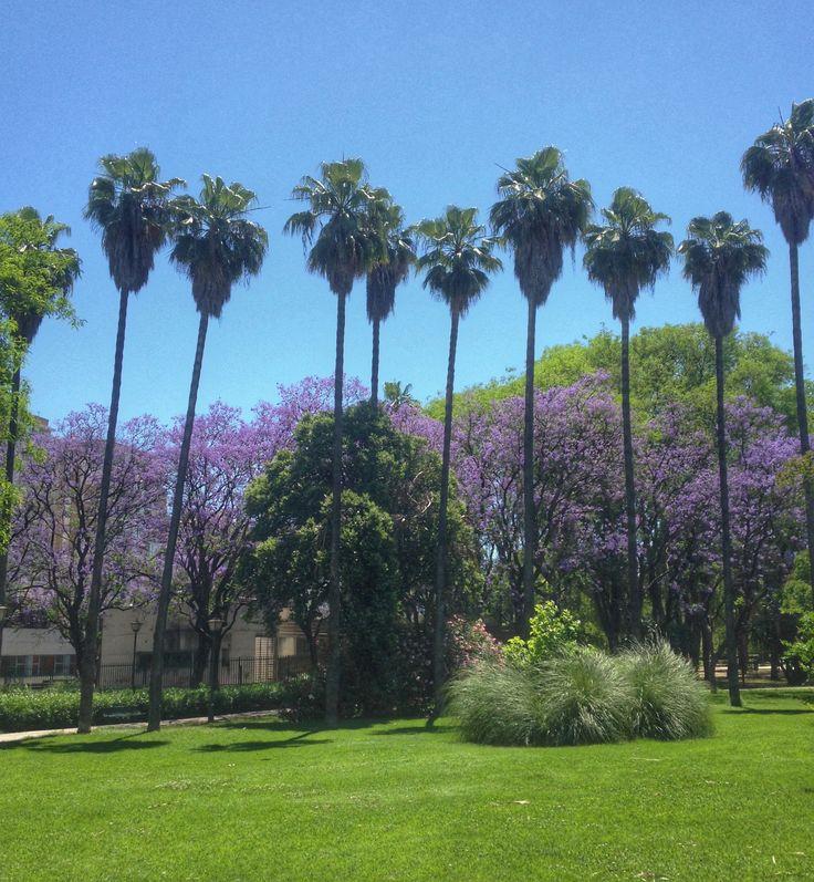 Palms and jacaranda blooms in Parque de Los Principes, Seville