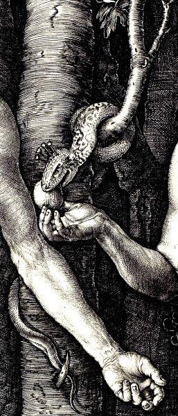 Albrecht Durer - Detail from the wood cut print of Adam and Eve