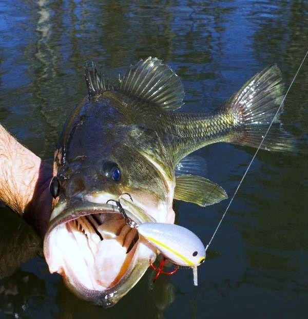 Best 231 0 bass fishin art for Best bass fishing kayak