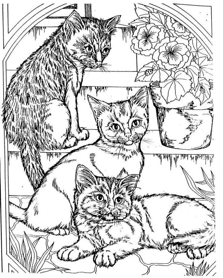 Free Coloring Pages Of Dogs And Cats : Real cat coloring pages. kids n fun com 68 coloring pages of cats