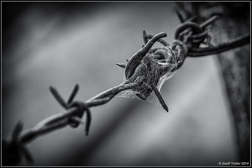 Barbed by Geoff Trotter, via Flickr