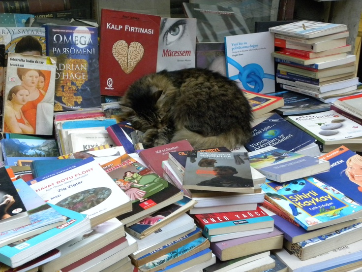 Even cats like reading..
