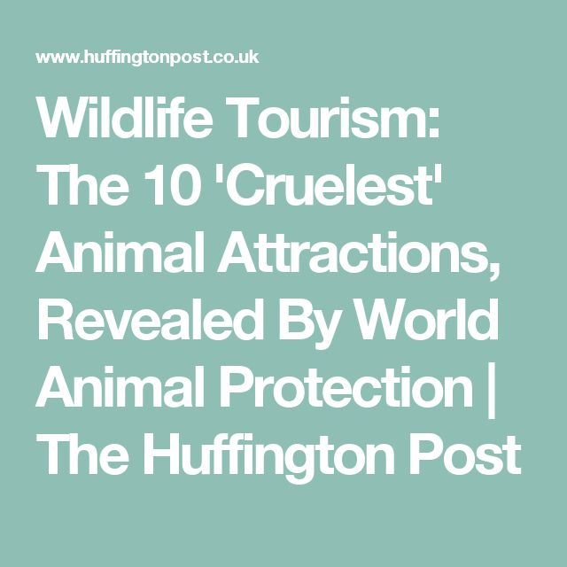 Wildlife Tourism: The 10 'Cruelest' Animal Attractions, Revealed By World Animal Protection | The Huffington Post