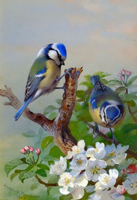 """ART BIRDS~(3/6 ) """"I Wish You Bluebirds In The Spring, To Give Your Heart A Song To Sing, And Then A Kiss. . .But More Than This. . . .I Wish You Love!""""~ Vintage Painting On Canvas~ Artist: Archibald Thorburn 1923~ ( And Song. . .Natalie Cole )"""