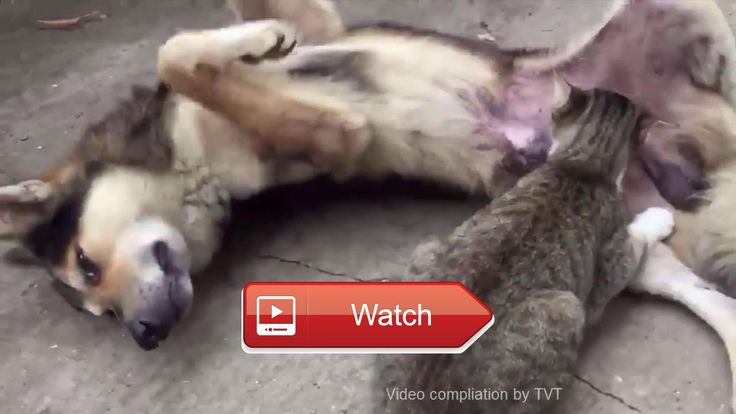 Funny Cats and dogs video compilation  Cat and dog video feel happy Call me when you feel great with this Dogs connect with me on fanpage for dog twitter  on Pet Lovers