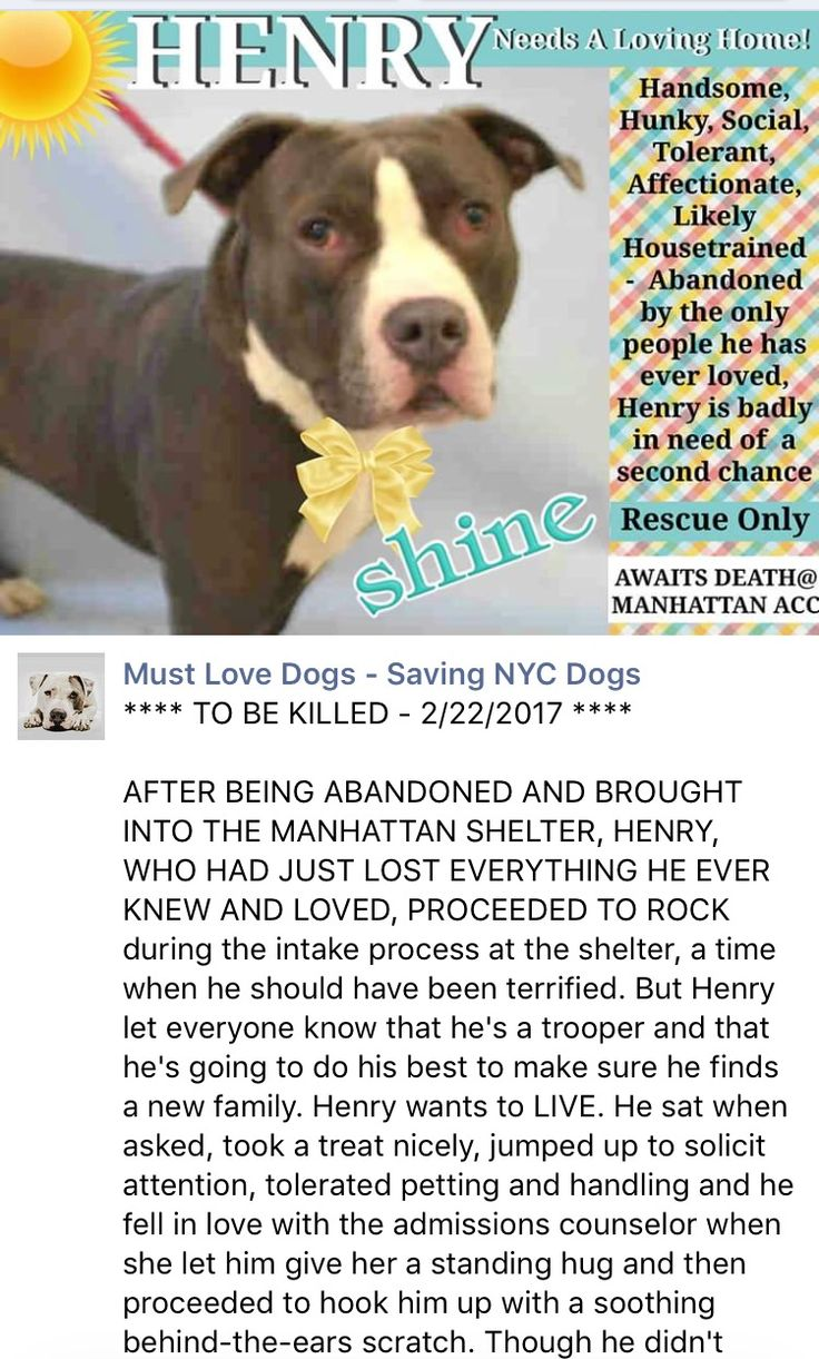 💔💔💔 TOTALLY HEARTLESS AND UNNECESSARILY MURDERED 2/22/17💔💔💔 JUST 2 YEARS YOUNG💔 HE REALLY DESERVED GETTING A LONG HAPPY LIFE BEING LOVED AND TREASURED❤️💔 THIS IS SO CRUEL AND SHOWING A TOTAL LACK OF COMPASSION💔💔 I'M SO VERY SORRY LOVE❤️ /ij🐾🐾Manhattan Center My name is HENRY. My Animal ID # is A1103994. I am a male gray and white staffordshire mix. The shelter thinks I am about 2 YEARS I came in the shelter as a STRAY on 02/17/2017 from NY 10467, owner surrender reason stated…