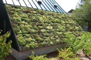 Grünes Dach Nachhaltigkeit