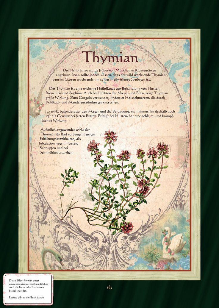 Thymian - Thymiantee                                                                                                                                                                                 Mehr