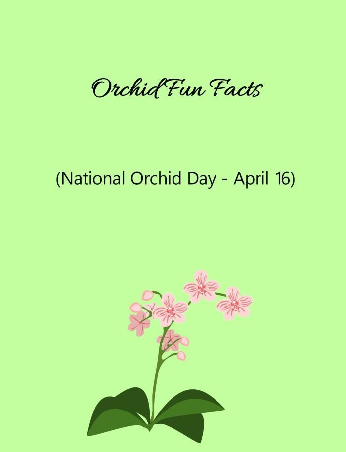 Discover some interesting fun facts about orchids