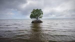 Kadir van Lohuizen: Facing Rising seas