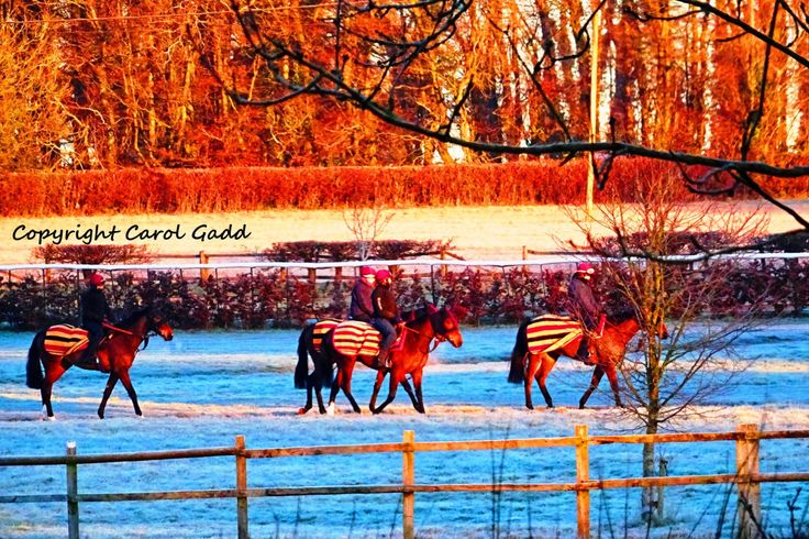 Race horses in winter, original photographic print, horses, equine by ByGaddArtandDesign on Etsy