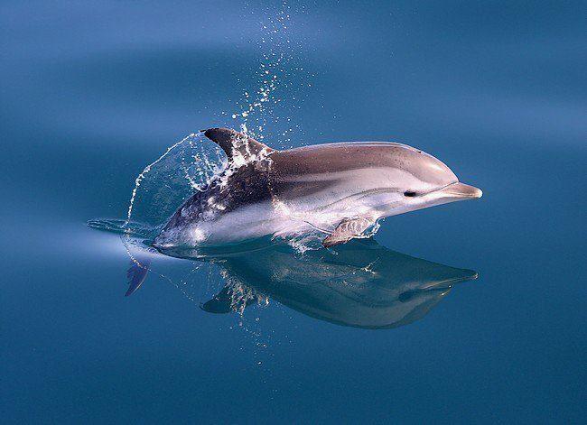 Adorable baby dolphin!!