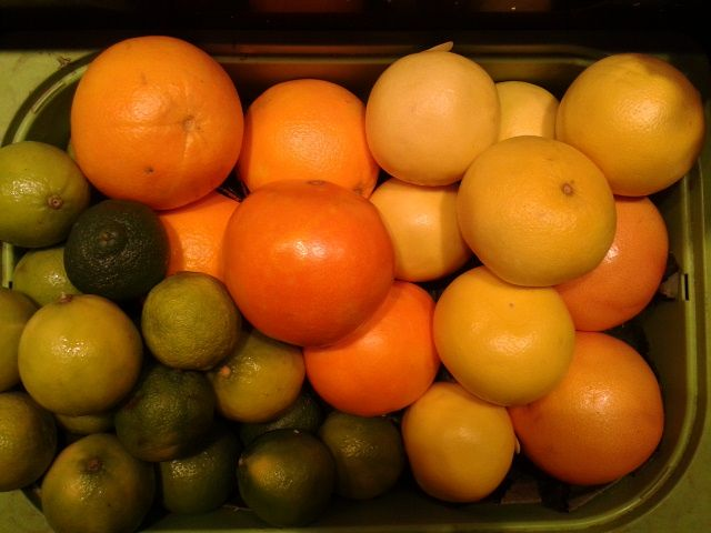 Oranges, limas and grapefruit at Fruites Soley Roser Stall