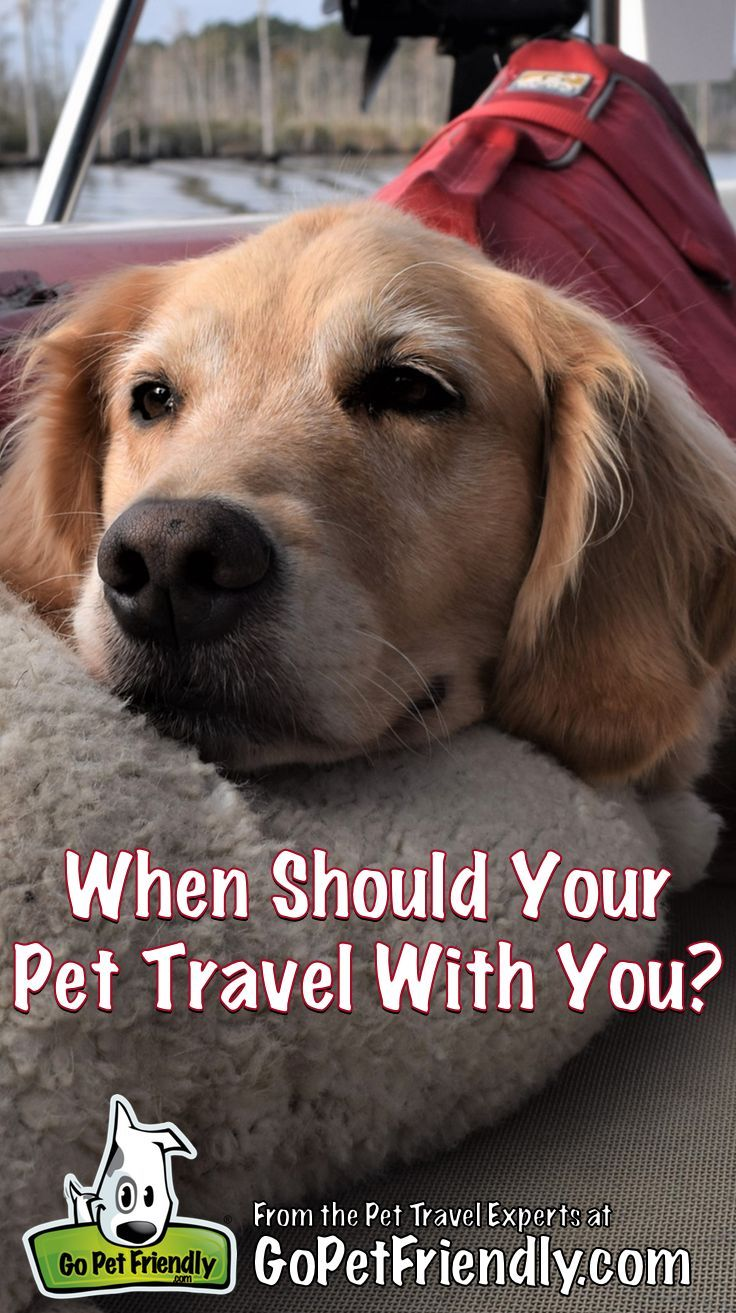 When Should Your Pet Travel With You Pet Travel Best Dog Toys