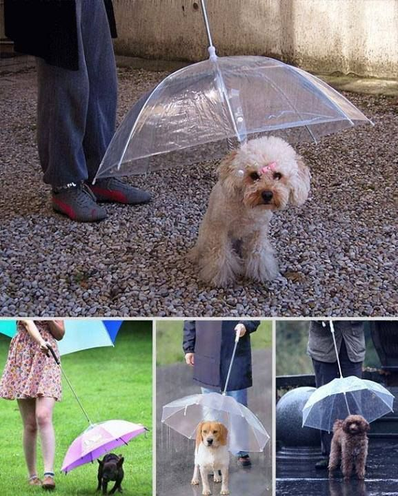 With all the rain we've had lately, I'm thinking I need one of these for my dog! - The dogbrella