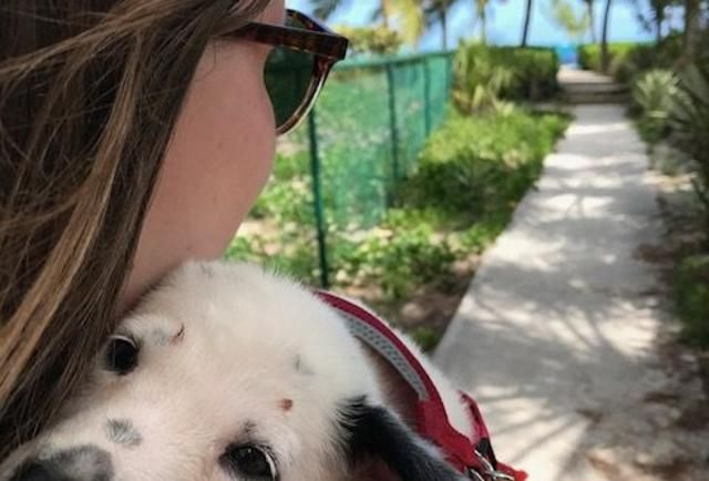 Travel To Turks & Caicos For Beaches, Snorkeling -- And Puppies https://www.forbes.com/sites/everettpotter/2017/04/17/travel-to-turks-caicos-for-beaches-snorkeling-and-puppies/#6a8995a11d5e