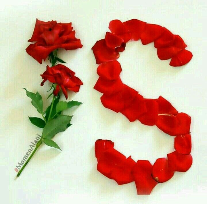 Red Rose Images S Name