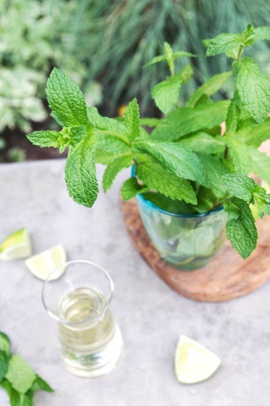 25 best ideas about growing mint on pinterest mint herb basil growing and pruning basil - Tips planting herbs lovage parsley dill ...