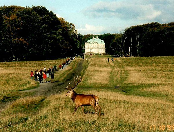The Deer Park near Lyngby Denmark