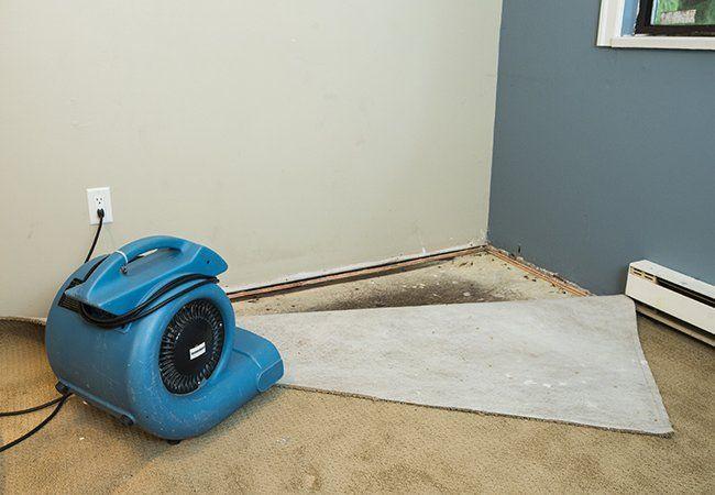 62bb4d0c4f58503b82a1bc918e061e1e - How To Get Rid Of Mold Out Of Carpet
