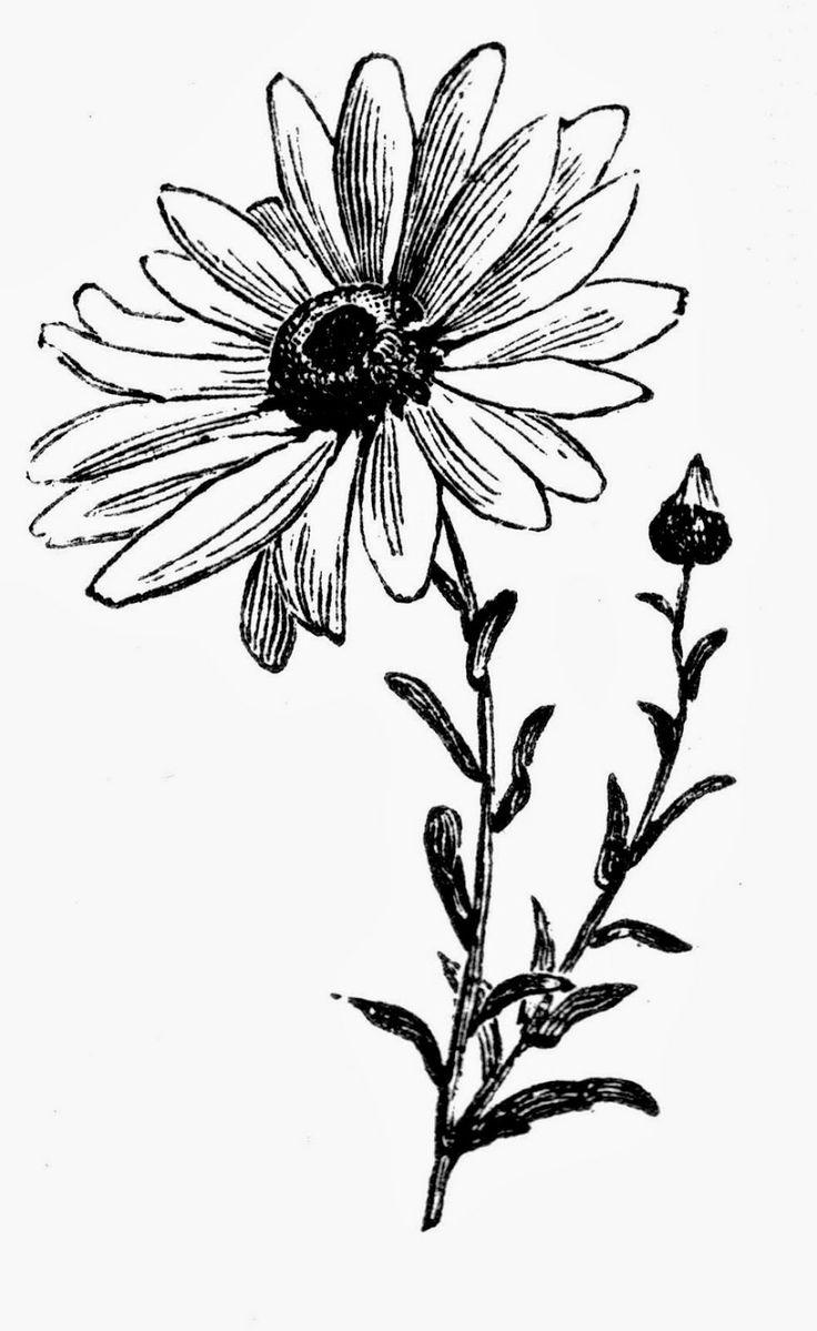 High Daisy Flower Vintage Printable Flower Pinterest