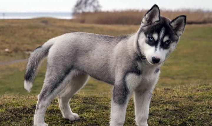 Super Smart Dog Breeds That Ll Surprise You In 2020 Smartest Dog