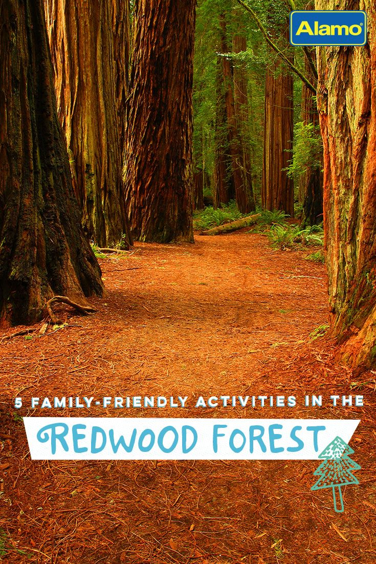 Redwood National and State Parks is home to the world's tallest living things and is an awe-inspiring family vacation destination. Read our list of the best family-friendly activities to do on your next trip to this northern California park.