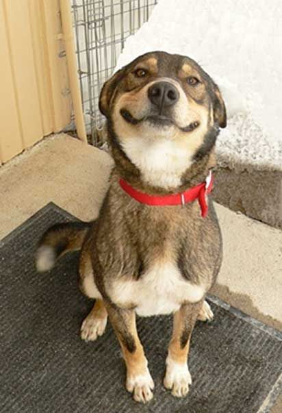 WATCH: Husky Puppy Discovers A Tennis Ball