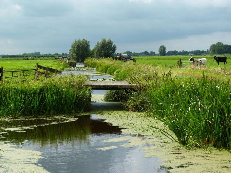 Nederland is rijk aan polders.