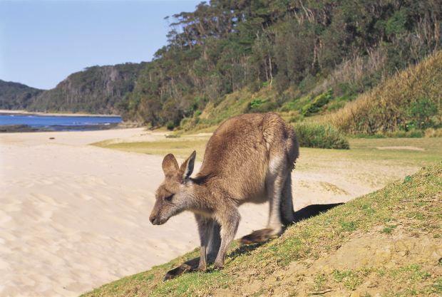 NSW South Coast - Pebbly Beach