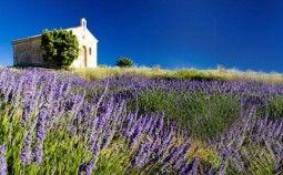 Tolle Seite rund um den Lavendel (Anbau, Pflege, Rezepte, Wissenswertes etc.)
