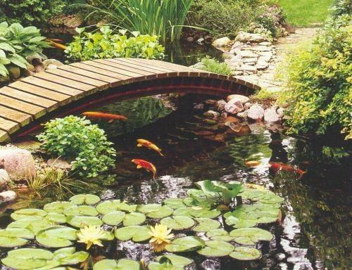 Garden Pond Maintenance Tips