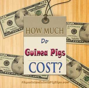 How Much Do Guinea Pigs Cost | http://abyssinianguineapigtips.com/how-much-do-guinea-pigs-cost/  A really detailed article covering the costs needed to get or maintain a guinea pig.  Includes three calculators, as well as a section on how to get free or discounted supplies.