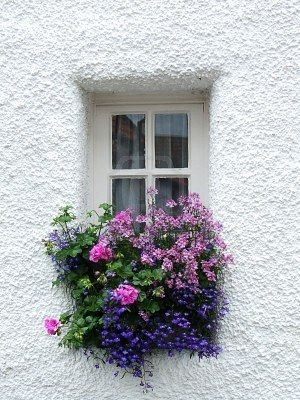 lilacs, lavender, purple: Doors, Beautiful Window, Color Combinations, Scottish Window, Building Flower Window Boxes, Window Flower, White Wall, Flower Boxes, Purple Flower