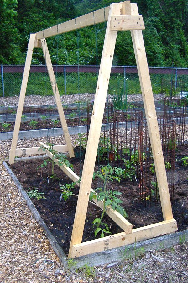 Diy tomato trellis google search gardening pinterest for Ideas for tomatoes from the garden