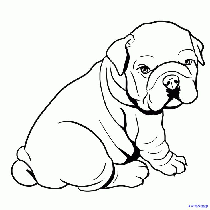 137 best perritos images on Pinterest Puppies Animals and Drawings