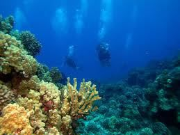 Enjoy the Underwater life with Scuba Diving!!  #ScubadivinginGoa is the best place for divers who want to satisfy their diving zeal. Here, you can discover the wonders of scuba diving and can attain the exceptional experience blend with adventure.  #scubadivinginindia #365hops