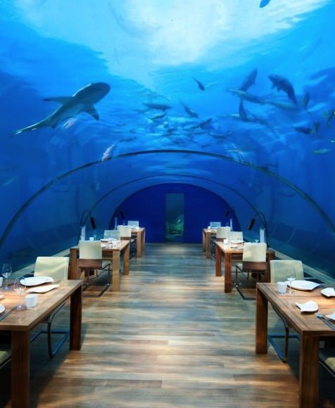 How would you like to sip a cocktail while looking up at the world's largest cylindrical aquarium?