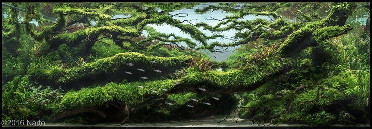 Meer dan 1000 afbeeldingen over Aquariums op Pinterest