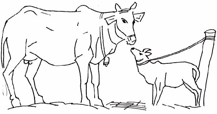 painting cow coloring pages - photo#9